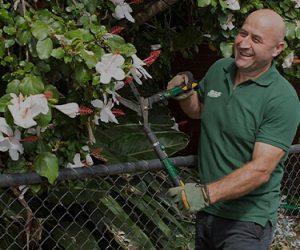 A Fanastic gardener pruning a tree