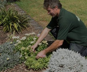 A Fanastic gardener taking care of garden plants