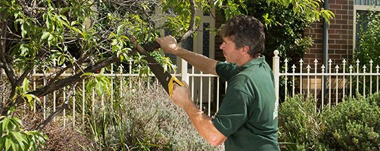 Tree services in Sydney by Fantastic Gardeners